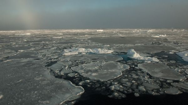photo image With Thick Ice Gone, Arctic Sea Ice Changes More Slowly